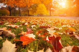 Unser IdeenTipp für den Herbst